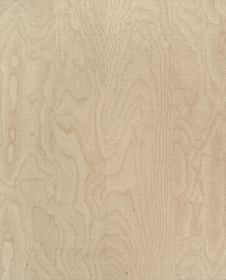 Free birch wood texture map for download